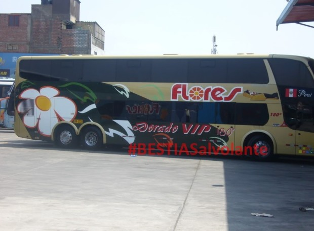 Bus de empresa Flores fue ASALTADO acerca a Chincha