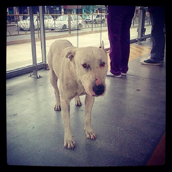 metro9 - vía @iosoimanuel, animal perdido en estacion uni